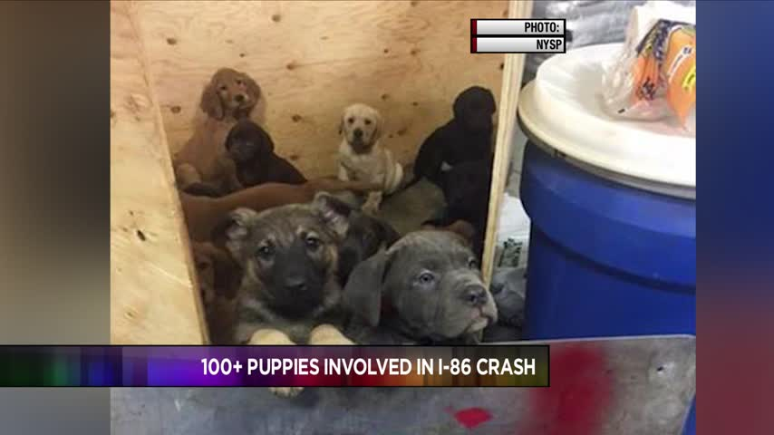 Update on Puppies Involved in Crash on I-86 East_85112774-118809198