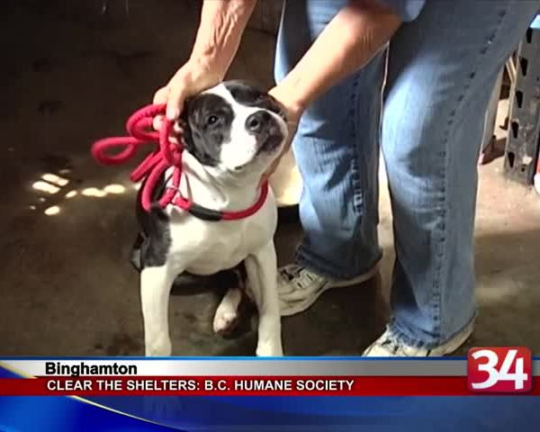 Clear the Shelters- Broome County Humane Society_49213569