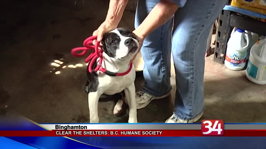 Clear the Shelters: Broome County Humane Society