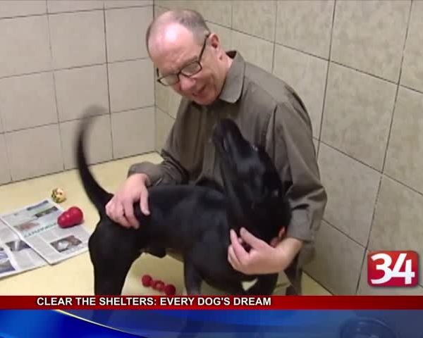 Clear the Shelters- Every Dog-s Dream Rescue_94188928