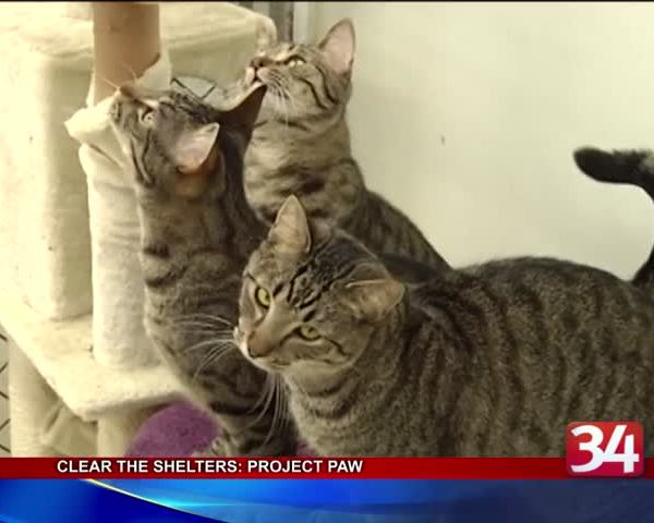 Clear the Shelters- Project Paw_86466184