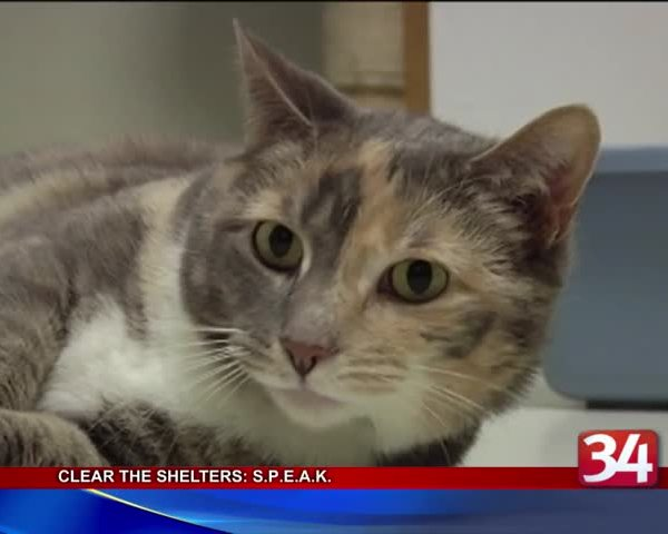 Clear the Shelters- S-P-E-A-K- Sanctuary and Animal Hospital_80853731