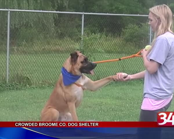 Broome County Dog Shelter sees increase in abandoned dogs_43976428