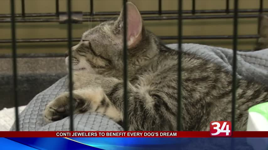 Conti Jewelers sale benefits local pet adoption center_95362810