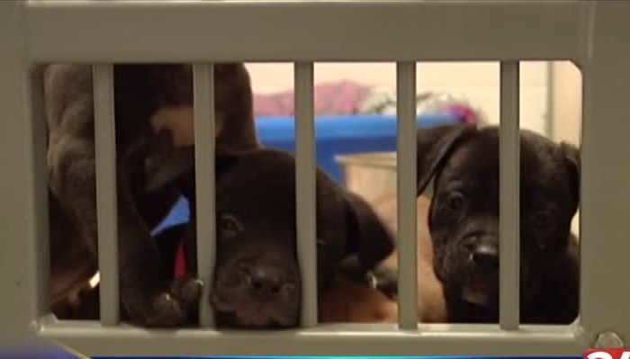 NewsChannel 34 brings -Clear the Shelters- to Spiedie Fest_10252433