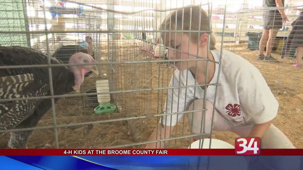 4-H kids learn hands-on farming at Broome County Fair | WIVT
